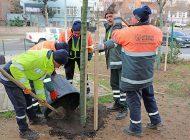 Ataşehir'de 30 Bin Fidan Dikildi, Park Sayısı 232'ye Çıktı
