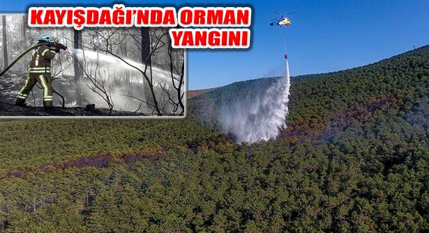 Ataşehir Kayışdağı Ormanı'nda Yangını Çıktı
