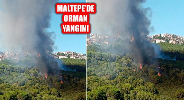 İstanbul Maltepe'deki Orman Yangını Söndürüldü