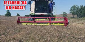 İstanbul'da Boş Arazilere Ekilen İlk Buğday Hasadı Yapıldı